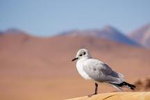 Río Putana, San Pedro de Atacama, Chile