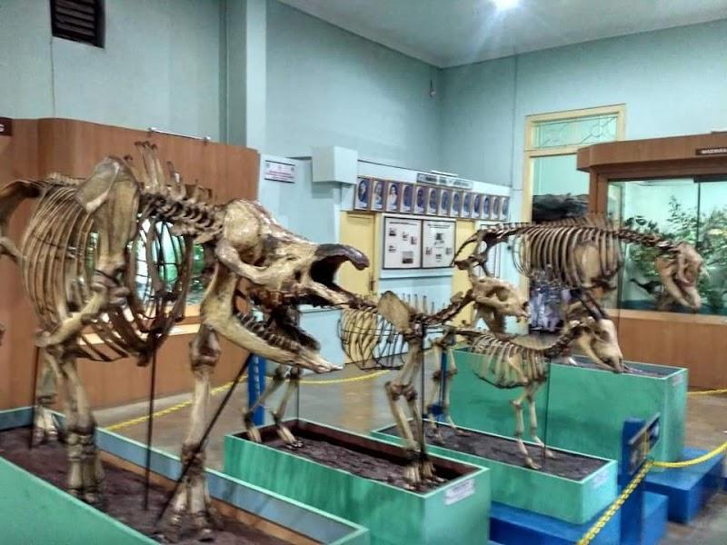 Wisata Museum Zoologi Bogor Wisata Jawa Barat