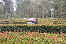 The Maze, home of Outback Splash, Bullsbrook, Australia