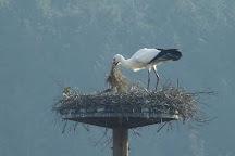 Hyogo Park of the Oriental White Stork, Toyooka, Japan