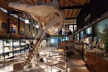 Het Oertijdmuseum, Boxtel, The Netherlands