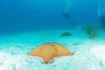 Weiler Caribbean Sea, Punta Cana, Dominican Republic