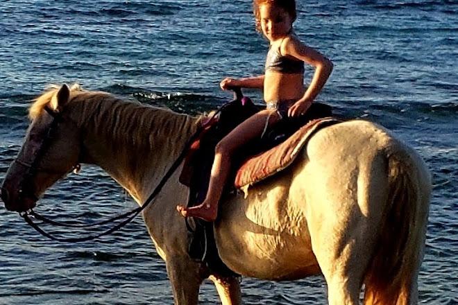 Equus Rides, Frederiksted, U.S. Virgin Islands