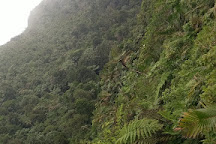 Mount Qua Qua, Grand Etang National Park, Grenada