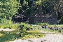 Twanoh State Park, Belfair, United States