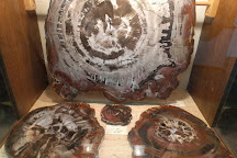 Petrified Wood Gallery, Ogallala, United States