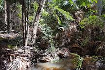 Tewantin National Park, Tewantin, Australia