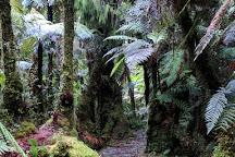 Minnehaha Walk, Fox Glacier, New Zealand