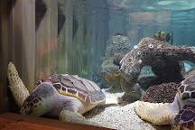 Oceanarium, Bournemouth, United Kingdom