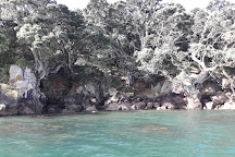 Moutohora Island Sanctuary (Whale Island) - Day Tour, Whakatane, New Zealand