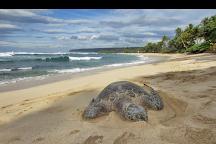 Custom Island Tours, Honolulu, United States