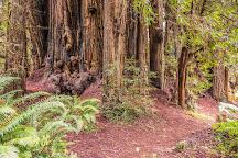 Prairie Creek Redwoods State Park, Orick, United States