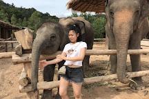 Elephant Family Phuket, Cherngtalay, Thailand