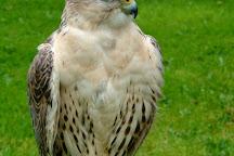 Cumberland Bird Of Prey Centre, Thurstonfield, United Kingdom