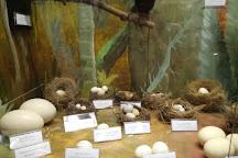 Ecologia Fritz Muller Museum, Blumenau, Brazil