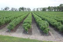 Red, White and Blues Farm, Williston, United States