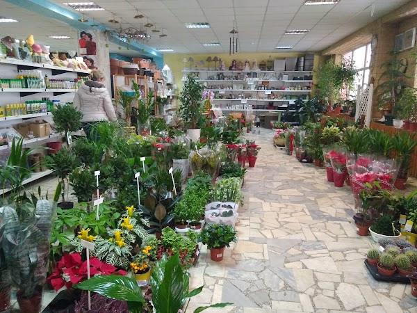 Купить цветы в пятигорске русский бутик, заказ букет