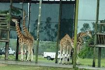 McCarthy's Wildlife Sanctuary, West Palm Beach, United States