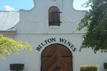 Bilton Wines, Stellenbosch, South Africa