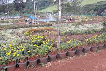 Banasura Spices Garden, Padinjarathara, India