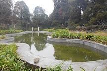 Happy Valley Tea Estate, Darjeeling, India