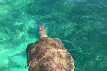 Abaco Tours & Activities, Treasure Cay, Bahamas