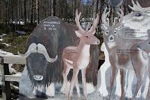 Ranua Zoo, Ranua, Finland