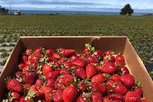Swanton Berry Farm, Pescadero, United States