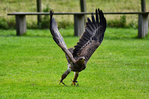Cotswold Falconry Centre, Moreton-in-Marsh, United Kingdom