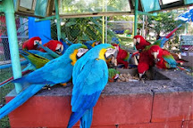 Uncle Sandy's Macaw Bird Park, Pensacola, United States