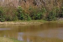 Seymour's Pond, Southampton Parish, Bermuda