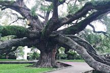 Jesse Ball Dupont Park, Jacksonville, United States