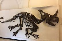 Paleontological Museum Munich, Munich, Germany