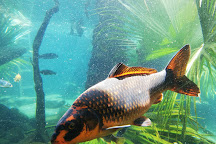 Hartbeespoort Aquarium, Hartbeespoort, South Africa