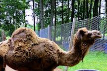 Bailiwick Animal Park, Catskill, United States