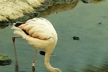 Arabian Wildlife Center, Sharjah, United Arab Emirates