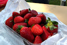 Shaylee Strawberries