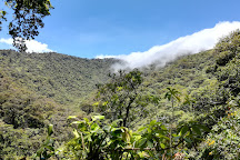Bosque Caricias los Leones, San Isidro, Costa Rica