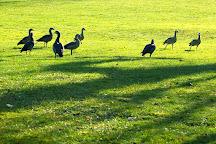 Kurpark, Wiesbaden, Germany