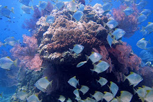 Blue Paradise Diving, Sanur, Indonesia