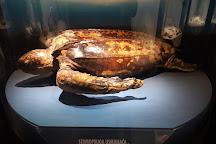 Natural History Museum, Rijeka, Croatia