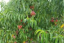Buffalo Trail Orchard, Greeneville, United States