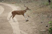 Rajaji National Park/Tiger Reserve Safari, Haridwar, India