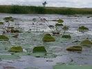 Рыбы Амура, улица Запарина на фото Хабаровска