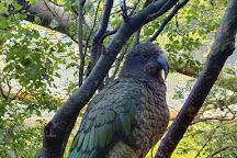 Paradise Valley Springs Wildlife Park, Rotorua, New Zealand