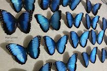 Mariposas Sarchi, Sarchi, Costa Rica
