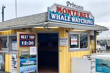 Princess Monterey Whale Watching, Monterey, United States