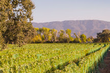 Roblar Winery & Vineyards, Santa Ynez, United States