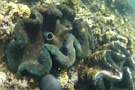 Giant Clam Sanctuary