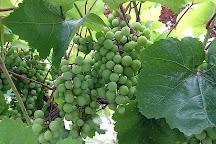 Yamabe Winery, Matsumoto, Japan